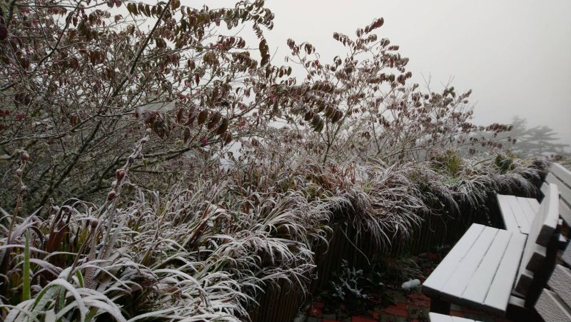 ▲向陽國家森林遊樂區31日下冰霰,台東林管處表示,大約凌晨兩點開始下冰霰,一直下到早上9點多。(圖/台東林管處提供)