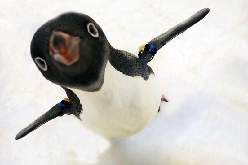 一秒到南極!屏東海生館推<b>企鵝</b>餵食體驗 每日限8人入場