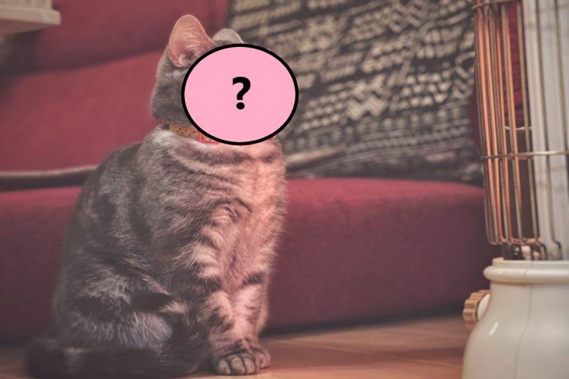 暖爐一打開 貓咪竟露出「這表情」:是<b>天堂</b>啊!