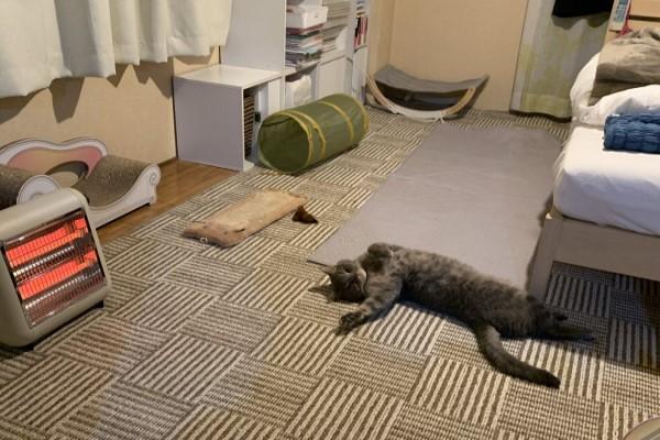 ▲@kechikunn:暖爐一開,貓就變這樣子了!(圖/twitter@kechikunn)