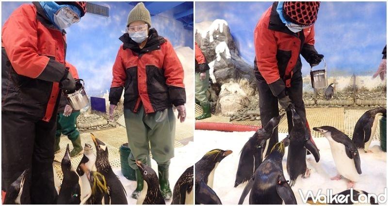 在台灣也能一秒到南極!超萌<b>企鵝</b>餵食體驗細節曝光