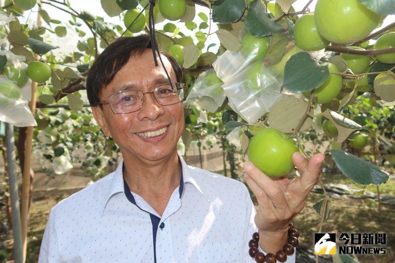 ▲埔心鄉農會總幹事張旗聞說,台灣近十年的棗子品質,經過專家的品種改良,生產出的棗子大顆氣派、甜度提升。(圖/記者陳雅芳攝,2021.01.03)