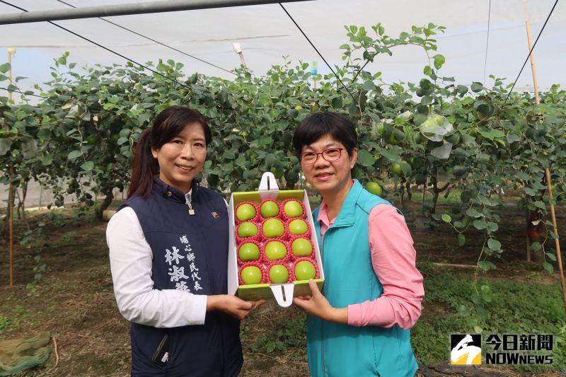▲台灣蜜棗早已贏得「台灣青蘋果」的美號。(圖/記者陳雅芳攝,2021.01.03)