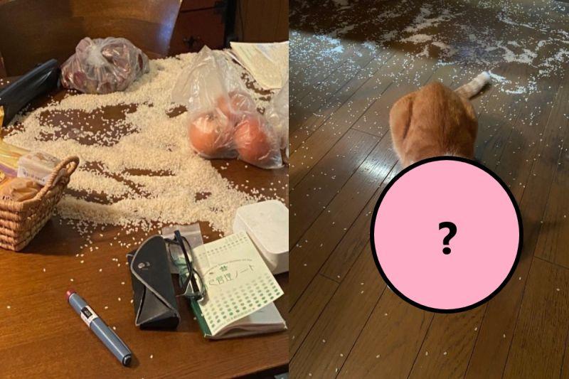 飼主發現白米被撒一地 兇手「一臉<b>無辜</b>」:這不是貓砂?