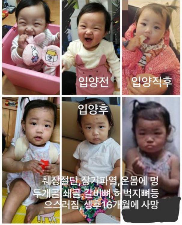 ▲有韓國網友整理鄭仁在寄養家庭、被領養後的照片,可以看見鄭仁身體健康有明顯的變化。(圖/翻攝自Twitter)