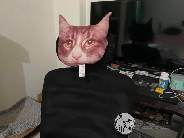 ▲原來牠是對賴先生「已經買很久」的貓咪擬真抱枕生氣啦!(圖/網友賴臆璠授權提供)