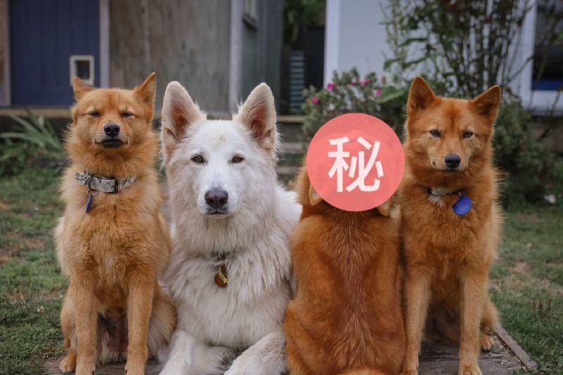 狗狗拍照就愛「搞怪招」,成為群狗中的大亮點!(圖/Instagram@kayatheshepherd)