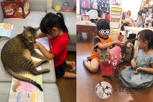 ▲另一隻虎斑貓「阿水弟」喜歡照鏡子也愛打架,卻是小貓奴的最佳玩伴,會在辦家家酒時擔任「來賓」(圖/網友Visa