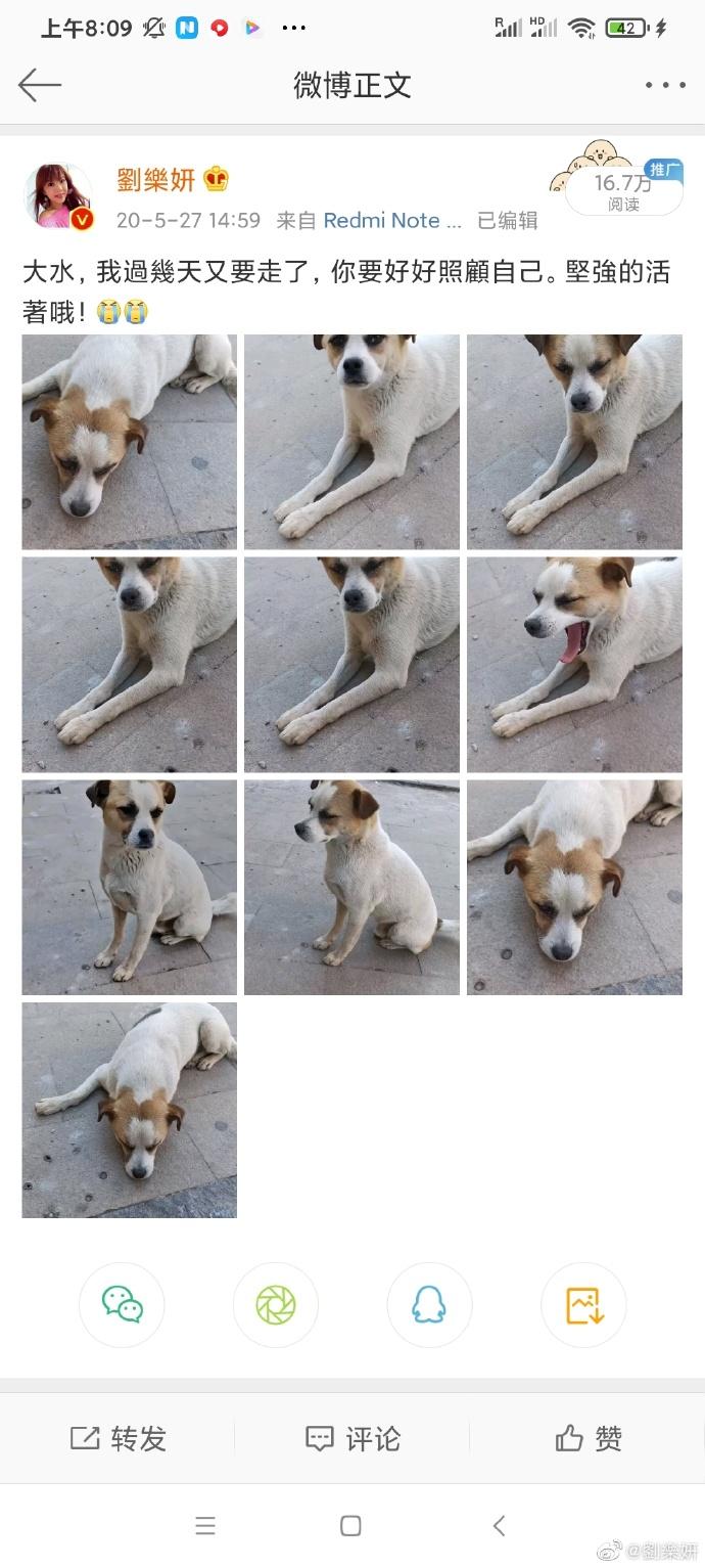 ▲劉樂妍時常分享愛犬照片。(圖/劉樂妍微博)