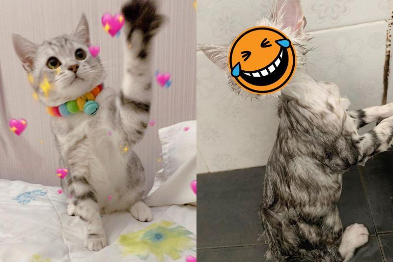 天使小萌貓遇水「瞬間消風」,看起來像隻小小外星人!(圖/Instagram@peanutcats)
