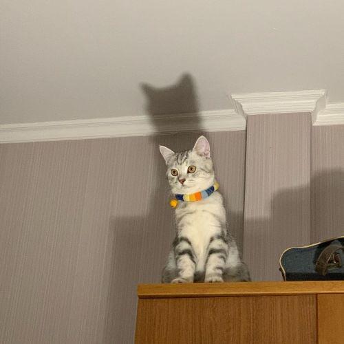▲The Catman!!(效仿蝙蝠俠)(圖/Instagram@peanutcats)