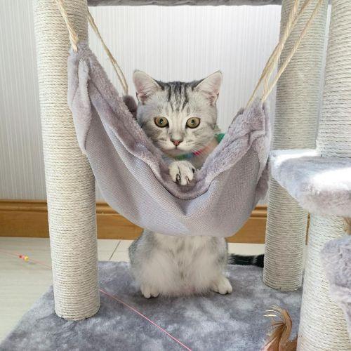 ▲什麼?你說等等要洗澡?!(圖/Instagram@peanutcats)