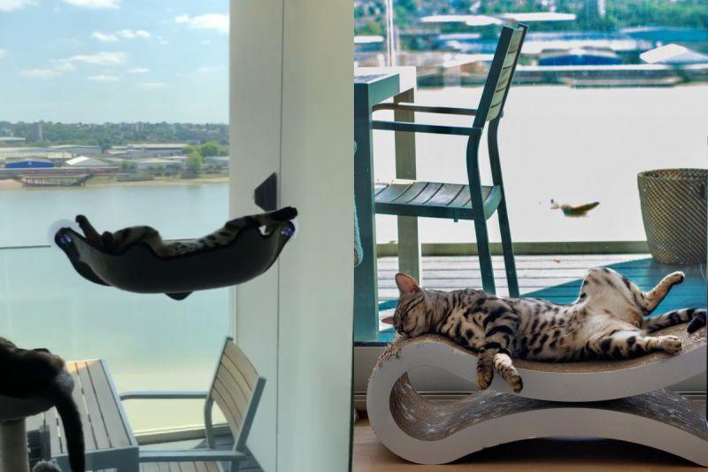 貓咪爽躺景觀「空中小床」,見人還伸出萌萌小手說嗨!(圖/Instagram@gato.bengal)