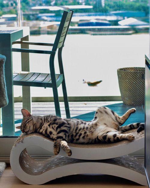▲把貓抓板當躺椅躺!?(圖/Instagram@gato.bengal)