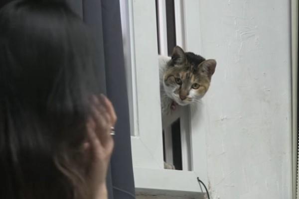▲原來這名「偷窺狂」是一隻三花虎斑貓!(圖/翻攝自Youtube@Kritter