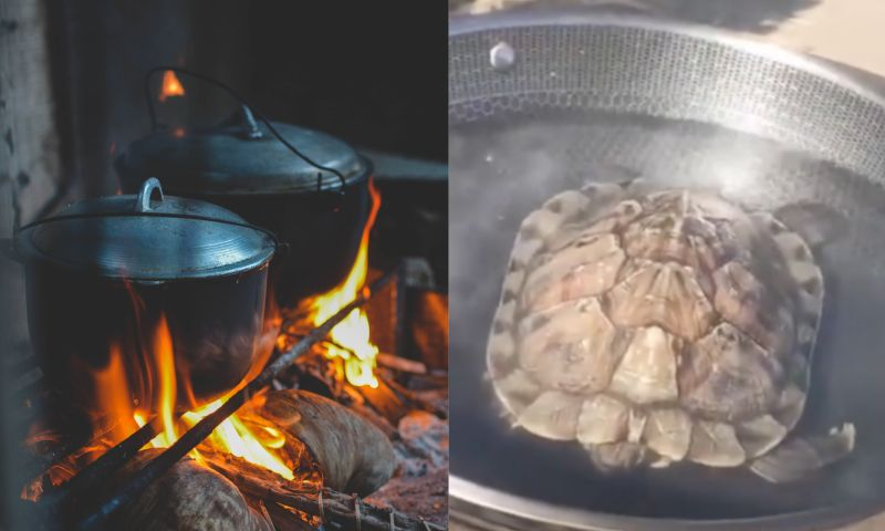 零下17度寵物龜慘凍暈!主人竟「煮來吃」 一下鍋嚇壞了