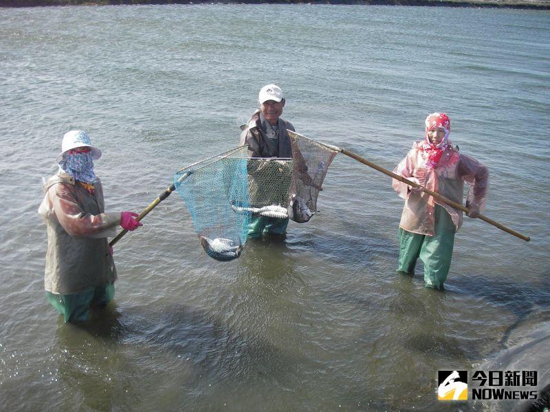 虱目魚凍死