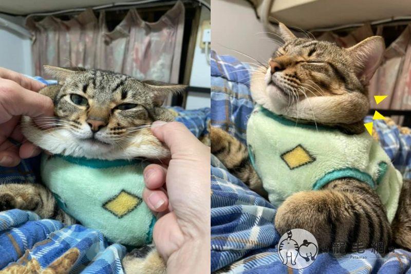 媽曬貓照驚見肥厚「嘴邊肉」溢出 網笑:自備脖圍啦!