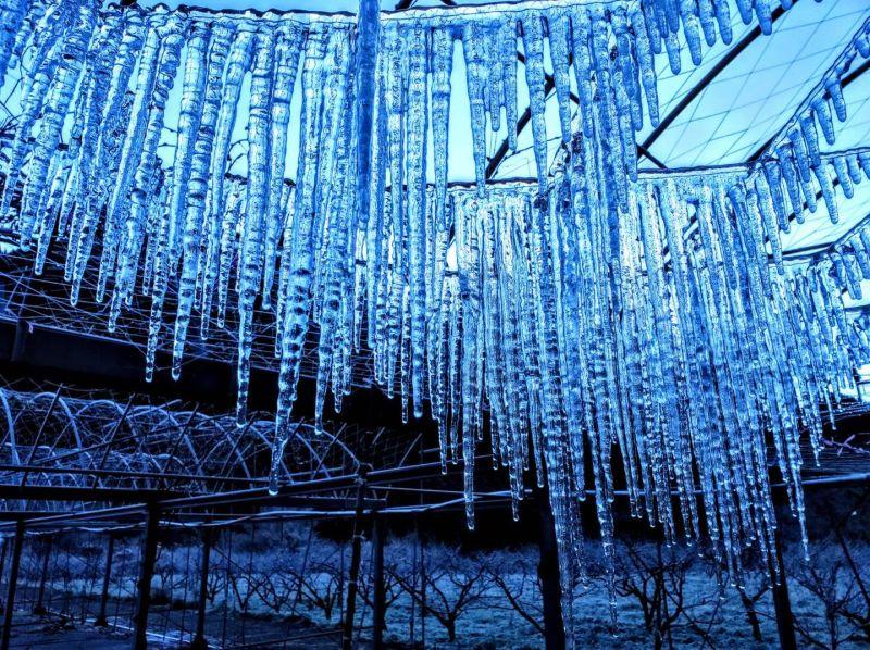武陵農場清晨氣溫零下近4度!「夢幻冰柱」美景曝光