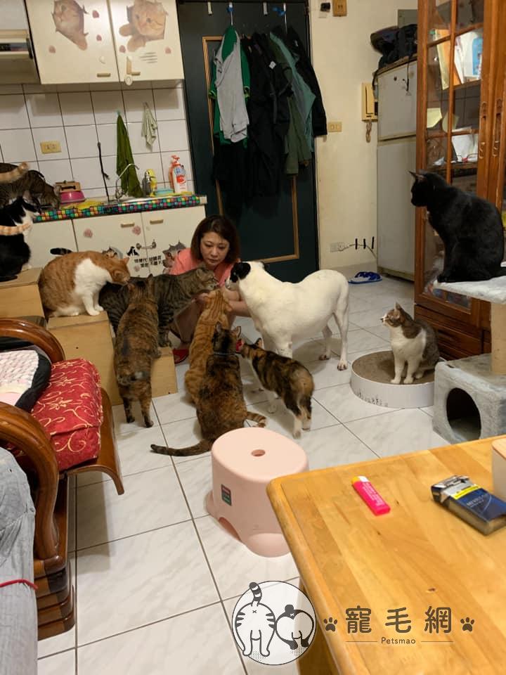 ▲網友家裡養了許多貓狗,都是領養或路邊撈回家,非常有愛心!(圖/網友Meng