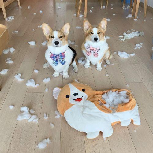 ▲狗狗:可憐的娃娃,我們緬懷它!(圖/Instagram@yayathecorgi)