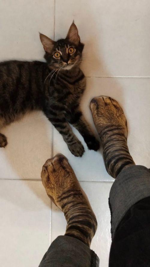 ▲貓:天啊!你的腿怎麼了!(圖/Twitter@bythefuckingway)