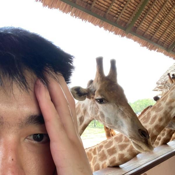 ▲網友原本想摀著額頭再與長頸鹿自拍,卻意外拍到讓大家笑翻的一幕(圖/FB@Puunpuun