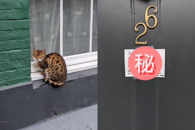 鄰居家一隻貓<b>可憐</b>縮門外 路人走近一看笑翻:很有個性!