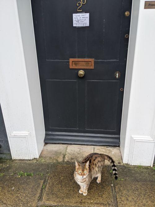 ▲人類:好可憐的小貓咪!牠一定很想進家門!(圖/Twitter@Charlietrypsin)