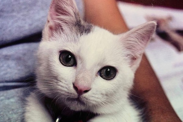 ▲推主剛收編貓咪「Megu」時,牠看起來相當可愛(圖/twitter@G_AKB)