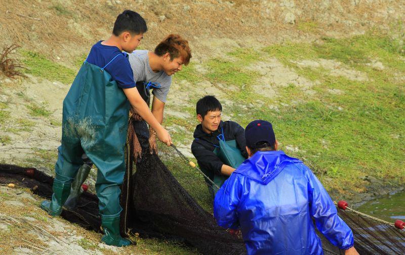 ▲蔡昌憲(右二)協助魚塭工作。(圖/公視)
