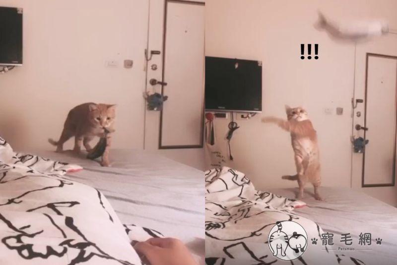 影/媽心情差卻遭貓「神來一甩」 網笑:瞬間忘記悲傷!