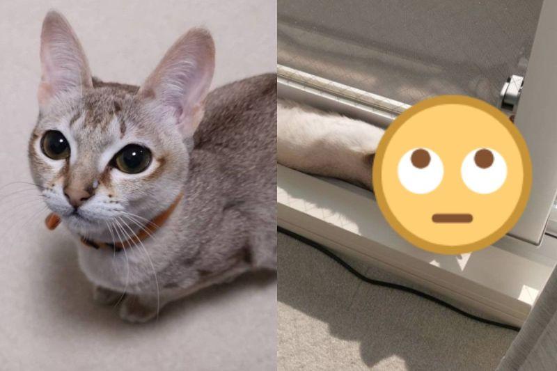 飼主找不到愛貓好著急 回頭牠竟然「埋」在這裡:找我?