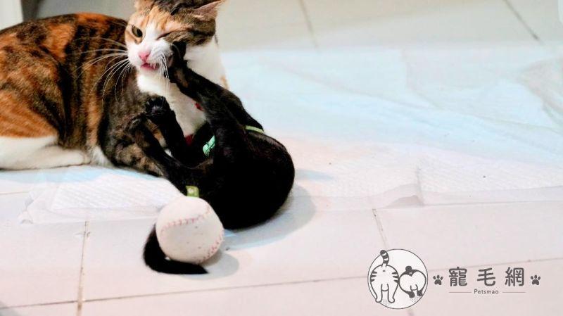 ▲麵麵:尼這隻小偷貓,賞尼一拳!