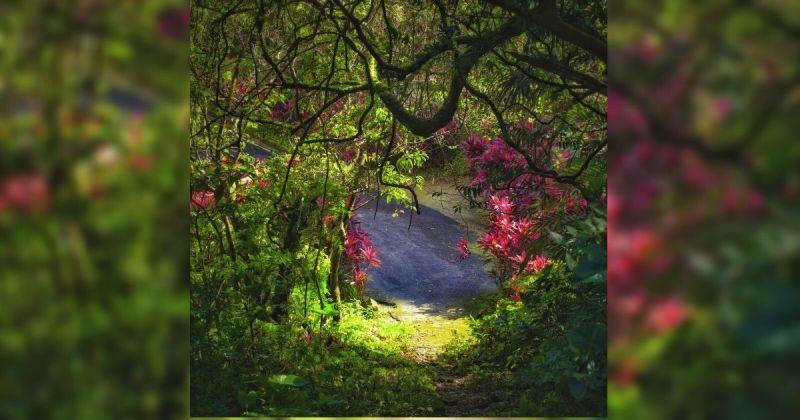 ▲這張照片被外國網友大讚為台版愛麗絲夢遊仙境,而其中一位網友也表示照片的氛圍讓人感覺隨時能看到裂嘴貓在樹枝上對著他們微笑。(圖/Philip Chang提供)