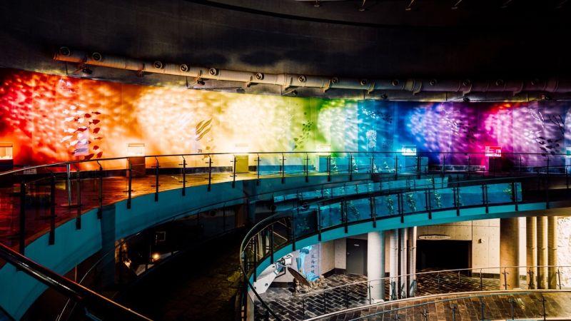▲屏東海生館全新展示活動「海洋本色」,將展出7種不同色系的海洋生物。(圖/屏東海生館提供)