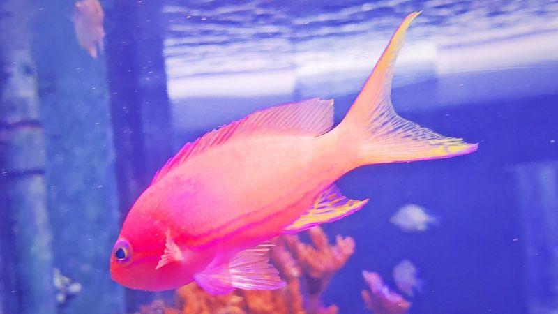 ▲7彩色系海洋生物悠游