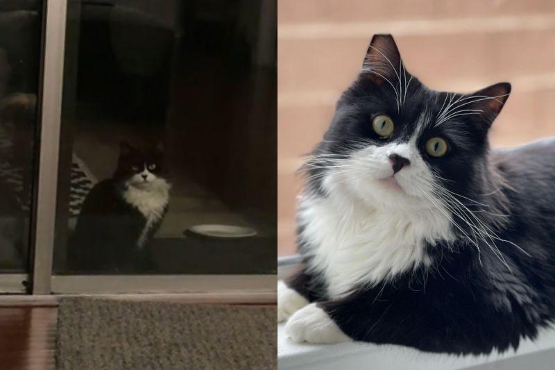 浪貓街頭散步發現這家庭有「好多貓」,駐足窗外偷看想加入!(圖/Instagram@withgracerescue)