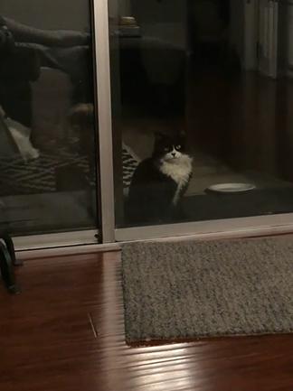 ▲賓士貓:哇這裡好多貓!但有點可怕!(圖/Instagram@withgracerescue)