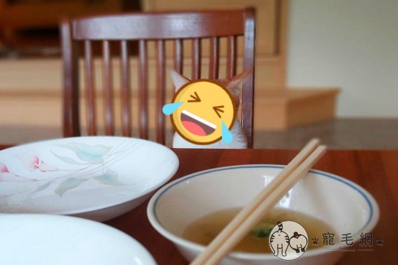 貓皇瞪視空無一物的餐桌 一臉不悅:都沒有留給我?