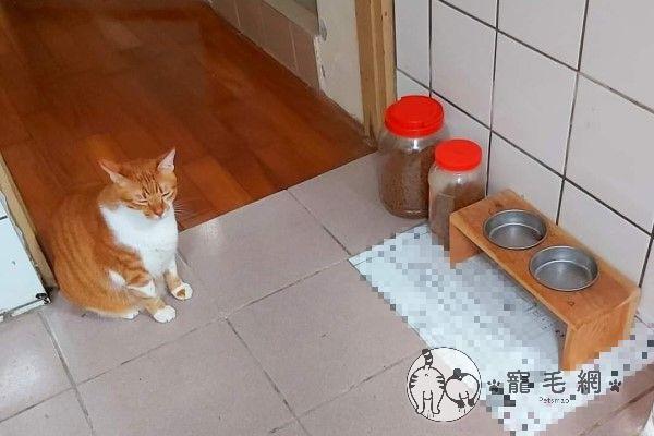 ▲等飯時會默默地坐在空碗前「閉眼冥想」(圖/網友Lee