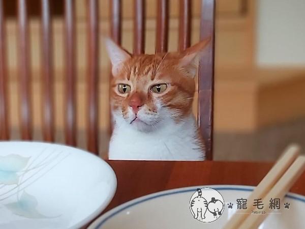 ▲橘:啊是……都不用留給偶喲?(不爽)全部都吃光惹……(圖/網友Lee