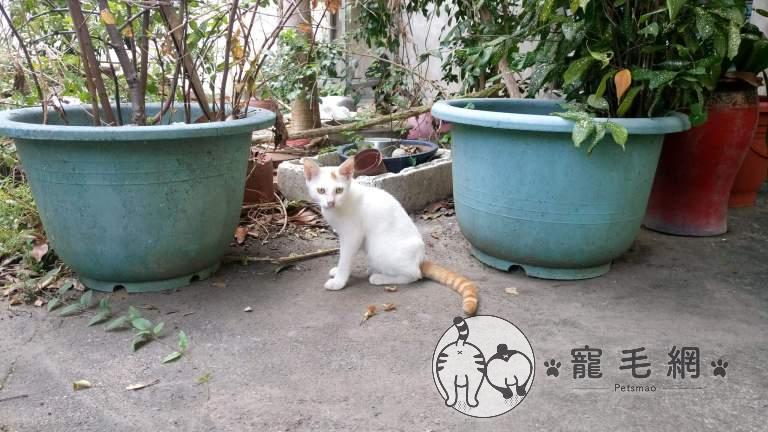 ▲2016年時一隻不怕生的橘白貓出現在網友家庭院。(圖/IG@咪醬帶小孩mii_chiang授權)