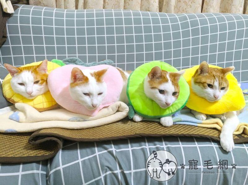 ▲很高興這窩貓不會被拆散(圖/IG@咪醬帶小孩mii_chiang授權)