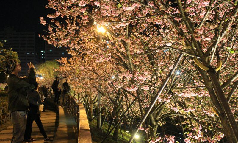 台北市長柯文哲28日宣布,因應新冠肺炎疫情升溫,台北市內湖夜櫻以及陽明山花季等活動都取消。