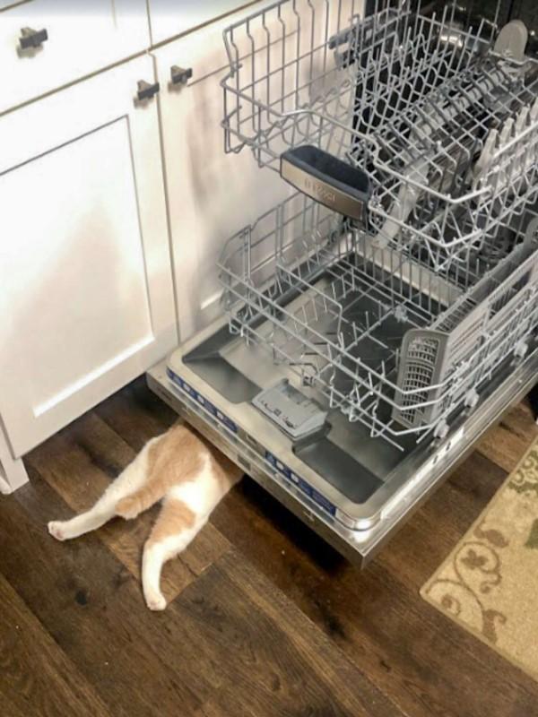 ▲牠甚至也會鑽進打開的洗碗機下方(圖/Dani