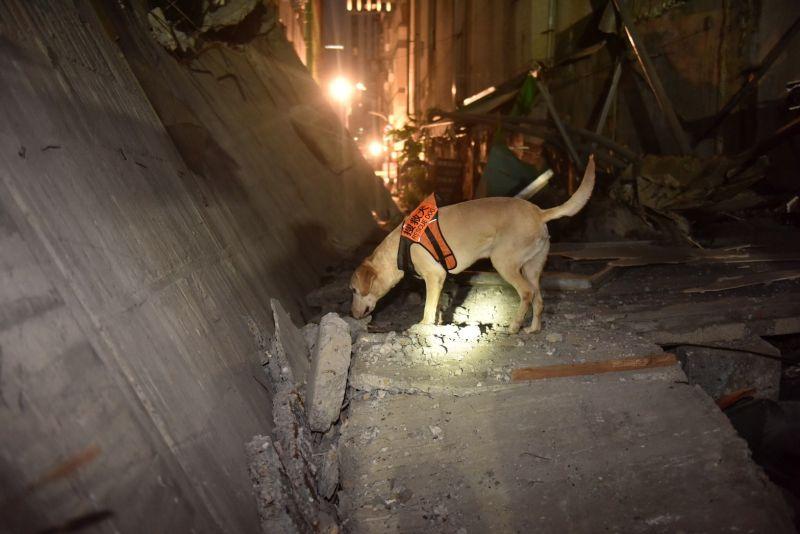 ▲捜救犬也到場搜索,幸無人員傷亡。(圖/高雄市政府提供)