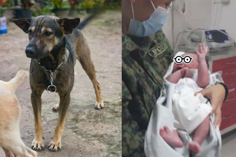 狗狗對男子狂吠 他緊跟在後竟在垃圾場救出一棄嬰!
