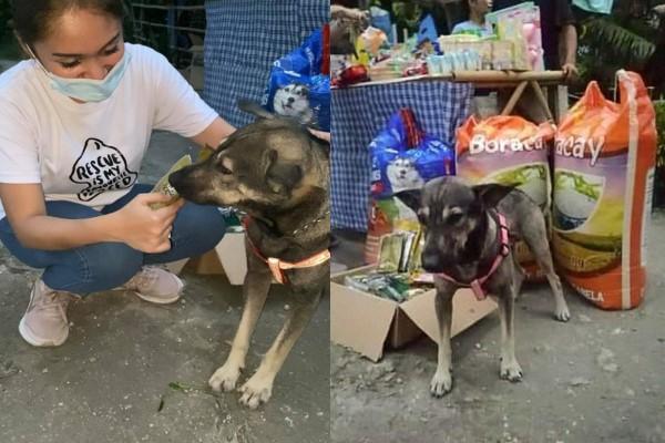 ▲小黑英勇的事蹟獲得許多人的讚賞,蓋亞也帶來飼料、罐罐與生活用品答謝牠的幫忙(圖/FB@Hope