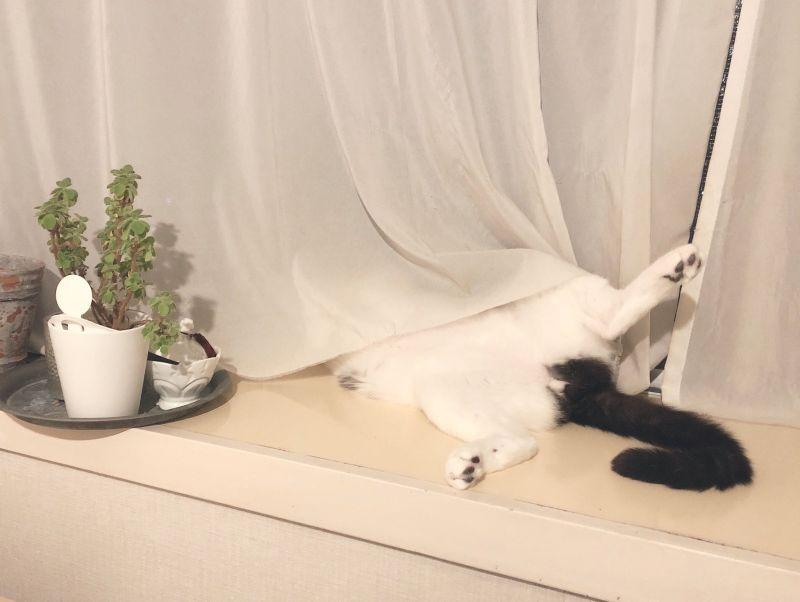 ▲當家貓的日子就是這麼幸福(圖/Twitter@meta_sd)